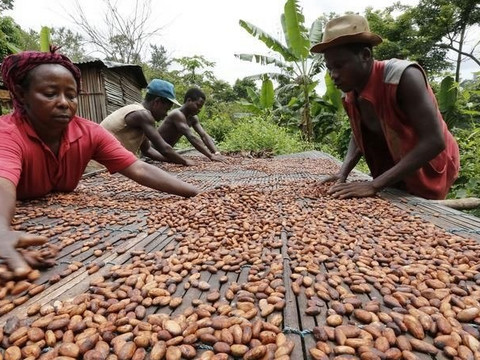 Ghana secured $200m for early cocoa payments