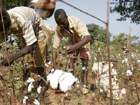 Ghana's government fixes cotton prices for the crop season